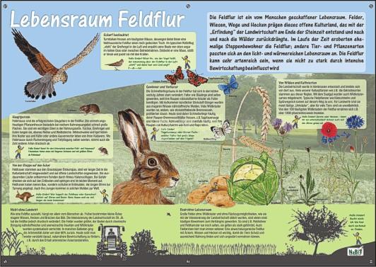 NaBiT Lebensraum-Tafel Feldflur