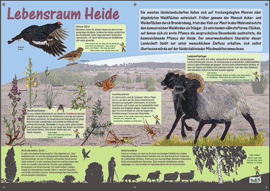NaBiT Lebensraum-Tafel Heide