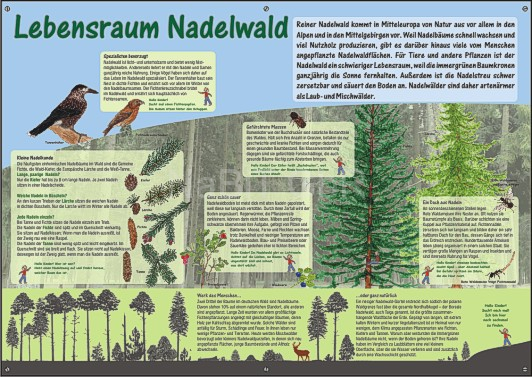 NaBiT Lebensraum-Tafel Nadelwald