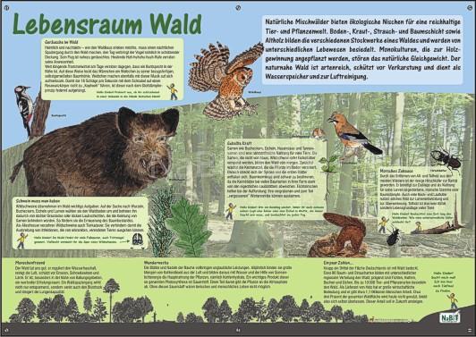 NaBiT Lebensraum-Tafel Wald