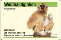 nabit_namen_weisshandgibbon