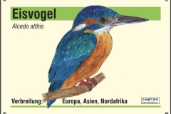 nabit_namenschild_eisvogel