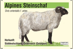 nabit_namenschild_steinschaf