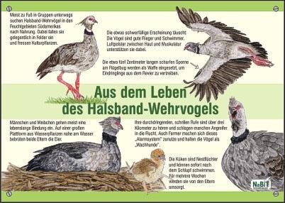 nabit_bildtafel_halsbandwehrvogel