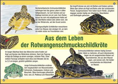 nabit_bildtafel_rotwangenschmuckschildkroete