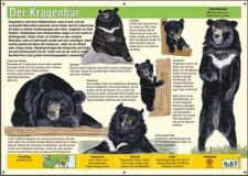 NaBiT Tierschild XXL Kragenbär (Ursus thibetanus)