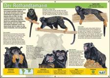 NaBiT Tierschild XXL Rothandtamarin (Saguinus midas)