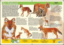 NaBiT Tierschild XXL Rothund (Cuon alpinus)