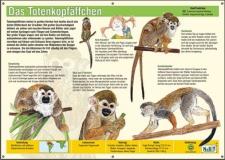 NaBiT Tierschild XXL Totenkopfäffchen (Saimiri sciureus)