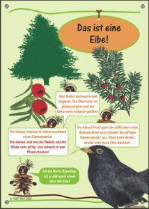 """nabit Kinder-Baumschild """"Eibe"""""""