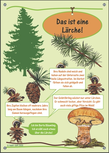 """nabit Kinder-Baumschild """"Lärche"""""""