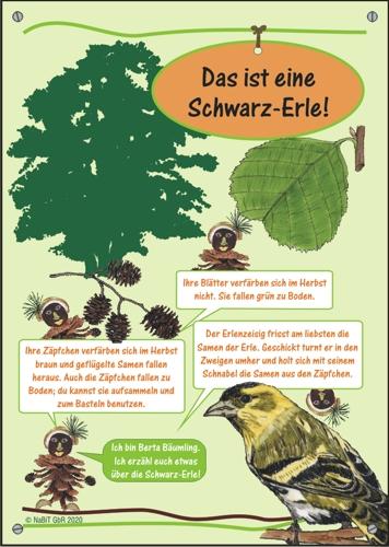 """nabit Kinder-Baumschild """"Schwarz-Erle"""""""