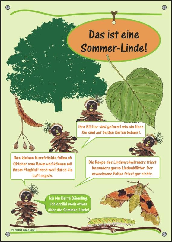 """nabit Kinder-Baumschild """"Sommer-Linde"""""""