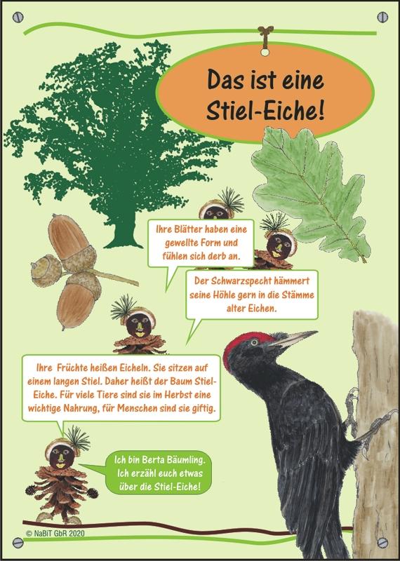 """nabit Kinder-Baumschild """"Stiel-Eiche"""""""