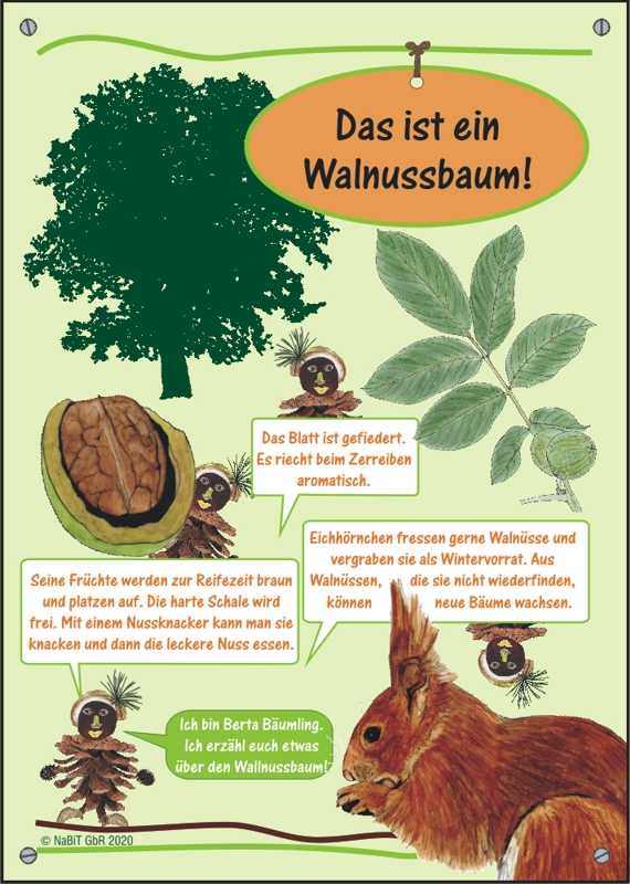 "nabit Kinder-Baumschild ""Walnuss"""